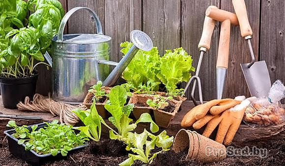 7 июльских советов садоводу и огороднику