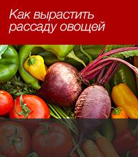 Как вырастить рассаду из семян овощей