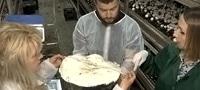 На Киевщине вырастили гигантский шампиньон