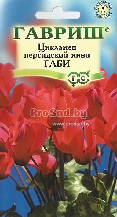 Купить семена Пеларгония герань