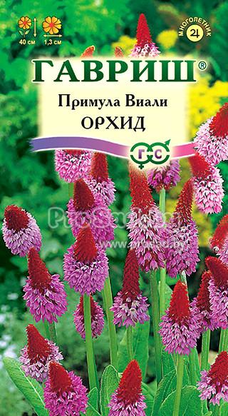 Комнатные цветы жакаранда 78