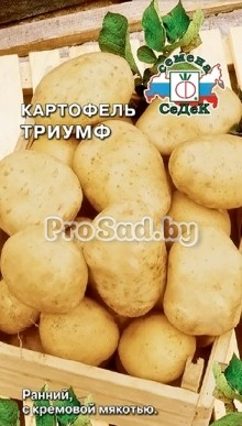 Картофель Триумф