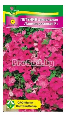 Комнатные цветы жакаранда 69