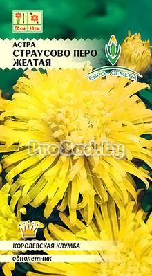 Астра Страусово перо Жёлтая