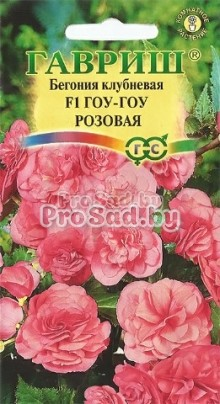 Бегония клубневая Гоу-Гоу Розовая