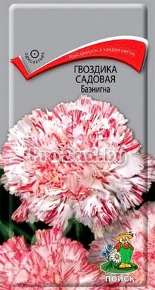 Гвоздика садовая Баэнигна