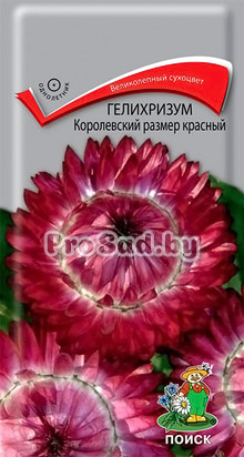 Гелихризум Королевский размер красный