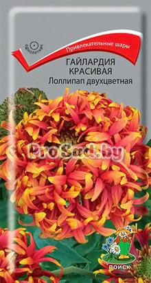 Гайлардия красивая Лоллипап двухцветная