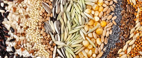 Подготовить семена для рассады