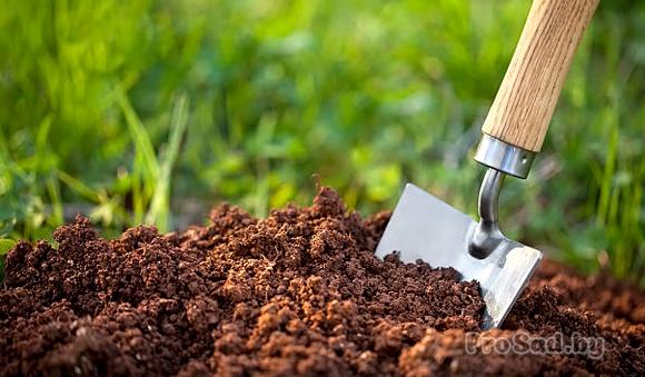 Осенняя обработка почвы на дачном участке