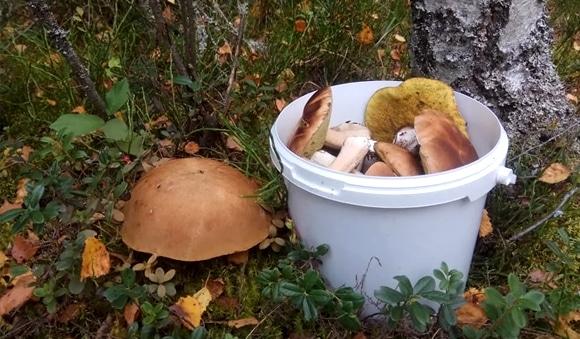 Белорусы делятся в соц.сетях уловом грибов за выходные