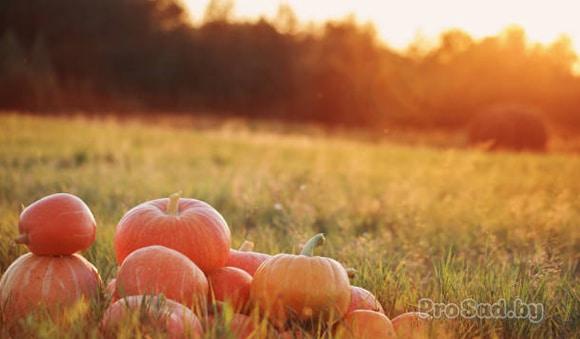 Какие овощи можно сажать в октябре?