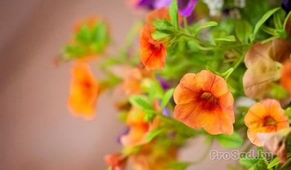 5 секретов выращивания рассады цветов