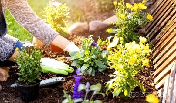 Готовим сад к новому сезону весной