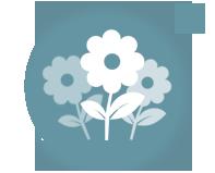 Купить семена однолетних цветов