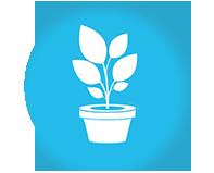 Купить семена комнатных цветов и растений