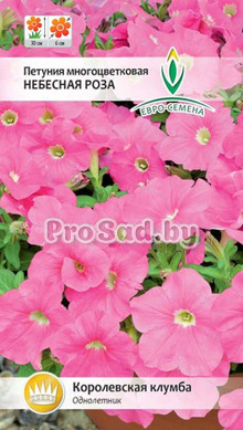 Петуния многоцветковая Небесная роза