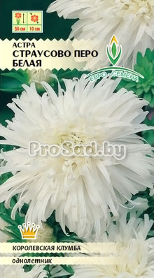Астра Страусово перо Белая