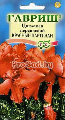 Цикламен персидский Красный партизан