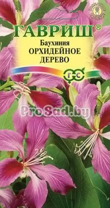 Баухиния пурпурная Орхидейное дерево