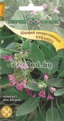 Шалфей лекарственный Кубанец