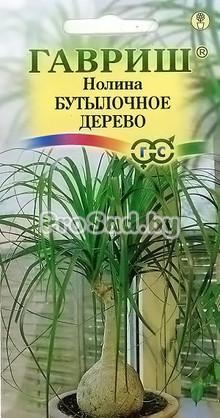 Нолина (Бокарнея) Бутылочное дерево